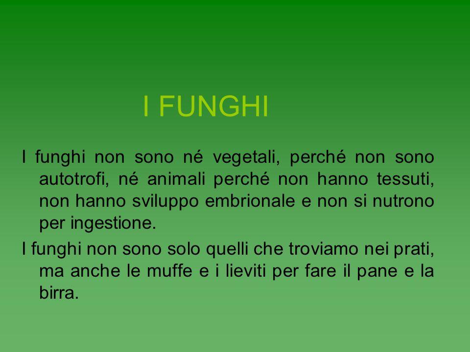 I FUNGHI I funghi non sono né vegetali, perché non sono autotrofi, né animali perché non hanno tessuti, non hanno sviluppo embrionale e non si nutrono