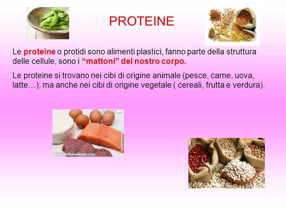 PROTEINE Le proteine o protidi sono alimenti plastici, fanno parte della struttura delle cellule, sono i mattoni del nostro corpo. Le proteine si trov