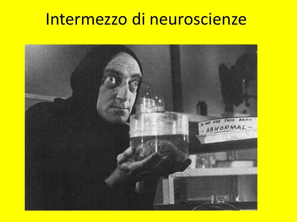 Intermezzo di neuroscienze