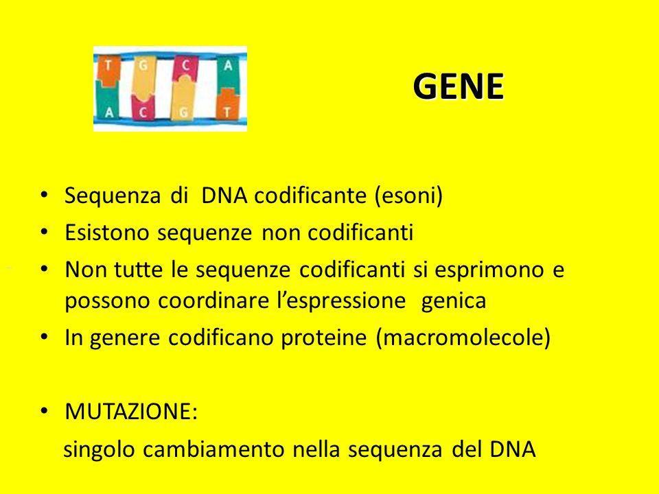 GENE Sequenza di DNA codificante (esoni) Esistono sequenze non codificanti Non tutte le sequenze codificanti si esprimono e possono coordinare lespres