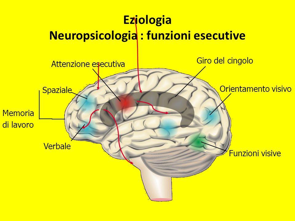 Orientamento visivo Funzioni visive Spaziale Verbale Giro del cingolo Attenzione esecutiva Memoria di lavoro Eziologia Neuropsicologia : funzioni esec