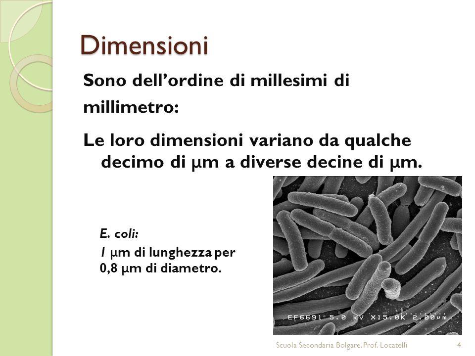 Dimensioni Sono dellordine di millesimi di millimetro: Le loro dimensioni variano da qualche decimo di μ m a diverse decine di μ m. E. coli: 1 μ m di