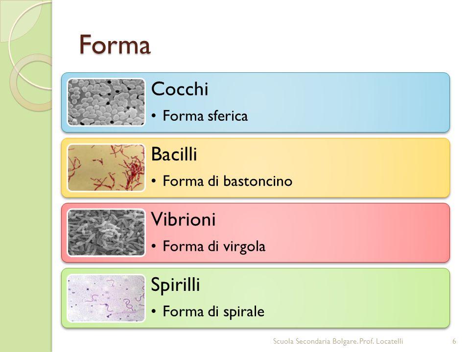 Forma Cocchi Forma sferica Bacilli Forma di bastoncino Vibrioni Forma di virgola Spirilli Forma di spirale 6Scuola Secondaria Bolgare. Prof. Locatelli