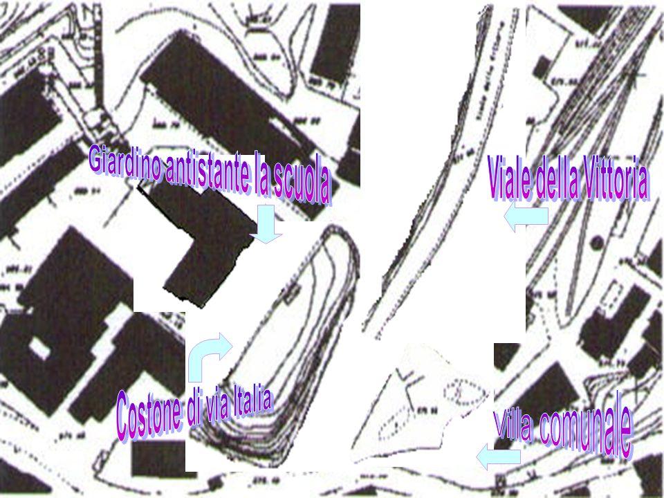 Genere e Specie: Aesculus hippocastanum Famiglia: Hippocastanaceae Località: Villa Comunale Altezza: 15-30 m Chioma: globosa allungata, molto ampia e densa Tronco: robusto, eretto e largamente ramoso; corteccia bruno-grigia, scura, ruvida in piccole placche Foglie: composte, palmatosette a 5-7 foglioline sessili, obovate, mucronate, dal margine doppiamente seghettato, lunghe oltre 20 cm; picciolo lungo anche 20 cm Fiori: infiorescenze a racemi eretti, terminali, di 20-30 cm; fiori a 5 petali bianchi maculati di rosa o giallo alla fauce; stami 7 sporgenti Frutti: ovali, verdi, con aculei poco pungenti, di 3-5 cm di diametro, contenenti uno o più semi simili a castagne
