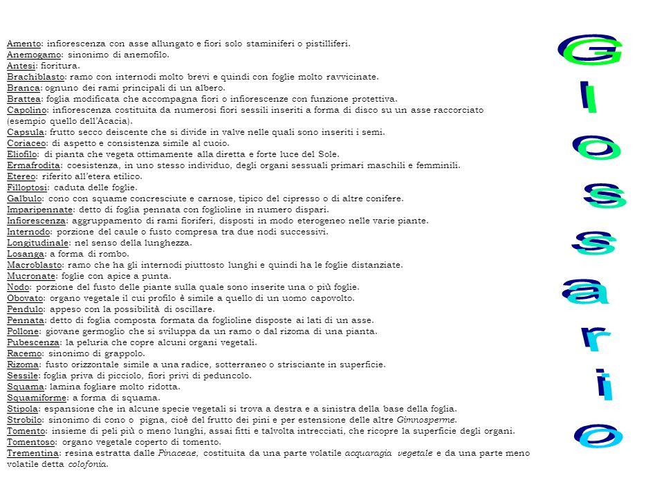 Genere e Specie: Robinia pseudoacacia L.