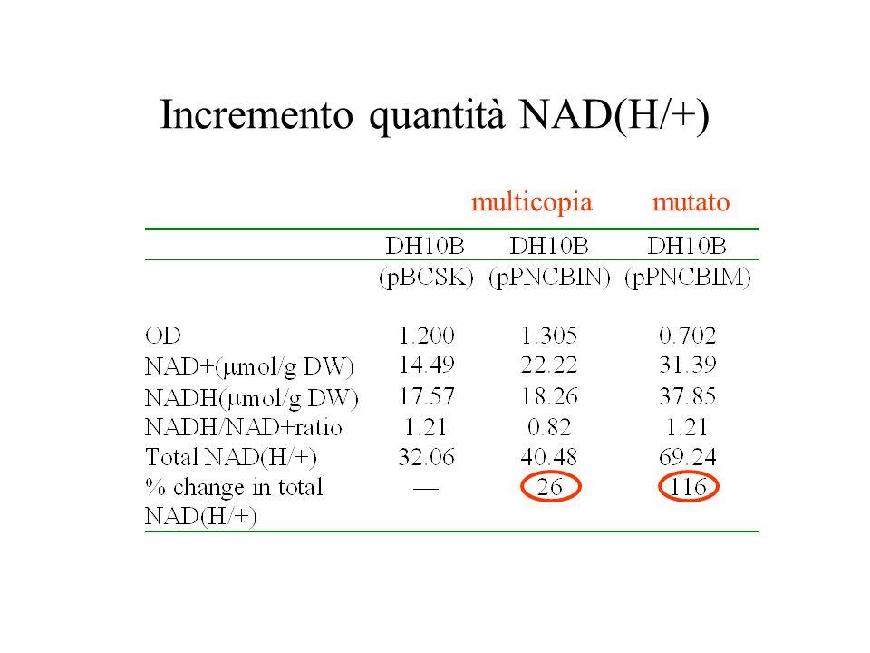 Incremento quantità NAD(H/+) multicopia mutato