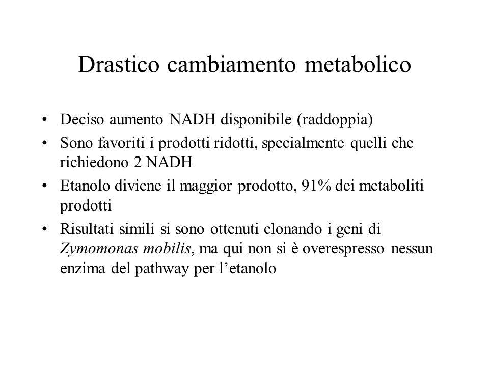 Drastico cambiamento metabolico Deciso aumento NADH disponibile (raddoppia) Sono favoriti i prodotti ridotti, specialmente quelli che richiedono 2 NADH Etanolo diviene il maggior prodotto, 91% dei metaboliti prodotti Risultati simili si sono ottenuti clonando i geni di Zymomonas mobilis, ma qui non si è overespresso nessun enzima del pathway per letanolo