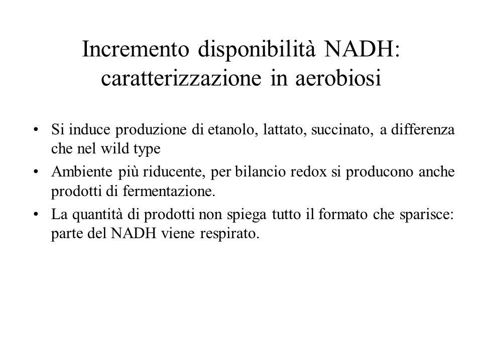 Incremento disponibilità NADH: caratterizzazione in aerobiosi Si induce produzione di etanolo, lattato, succinato, a differenza che nel wild type Ambiente più riducente, per bilancio redox si producono anche prodotti di fermentazione.