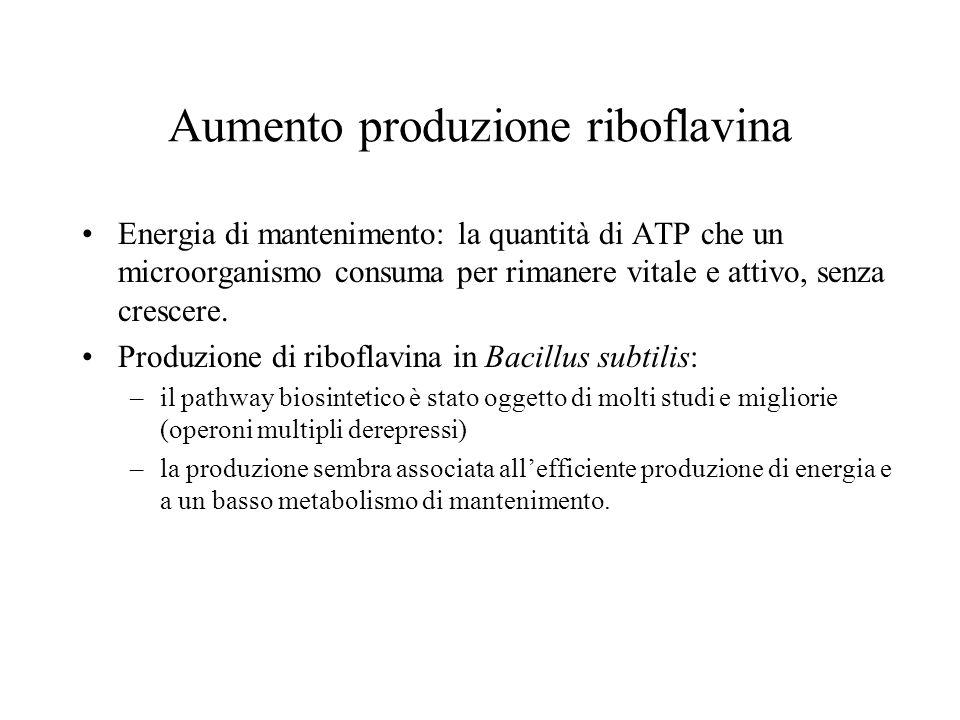 Aumento produzione riboflavina Energia di mantenimento: la quantità di ATP che un microorganismo consuma per rimanere vitale e attivo, senza crescere.
