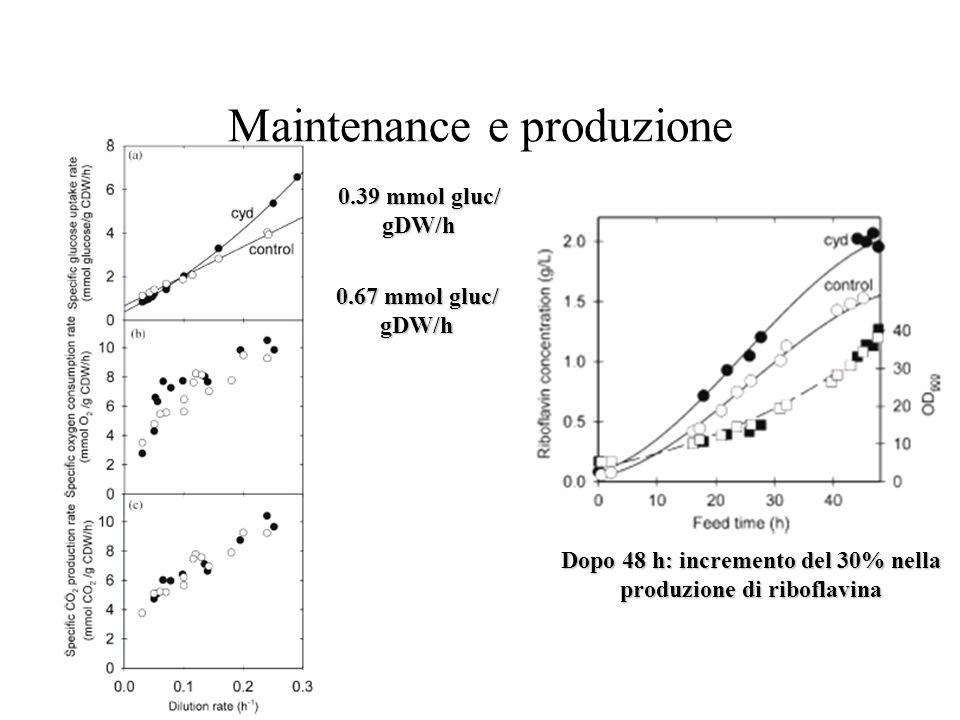 Maintenance e produzione 0.67 mmol gluc/ gDW/h 0.39 mmol gluc/ gDW/h Dopo 48 h: incremento del 30% nella produzione di riboflavina