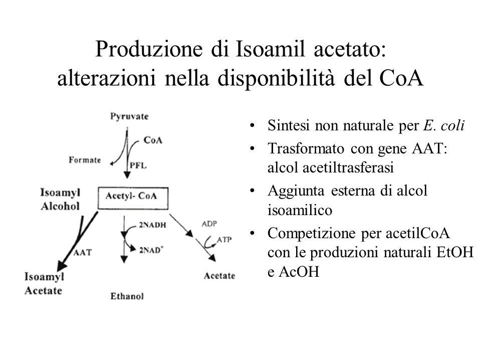 Produzione di Isoamil acetato: alterazioni nella disponibilità del CoA Sintesi non naturale per E. coli Trasformato con gene AAT: alcol acetiltrasfera