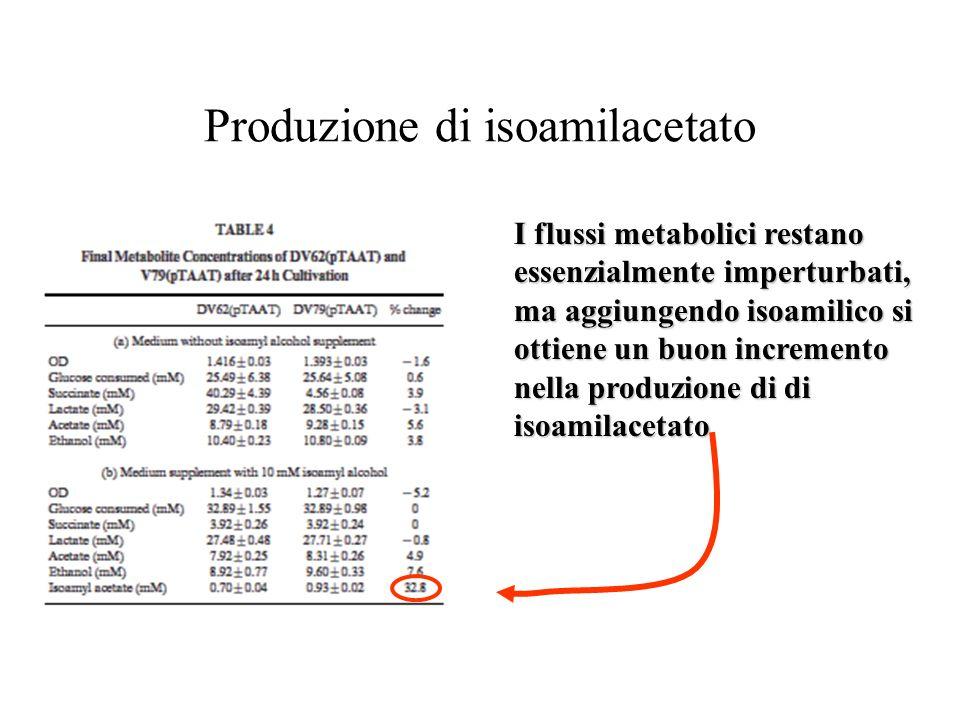 Produzione di isoamilacetato I flussi metabolici restano essenzialmente imperturbati, ma aggiungendo isoamilico si ottiene un buon incremento nella produzione di di isoamilacetato