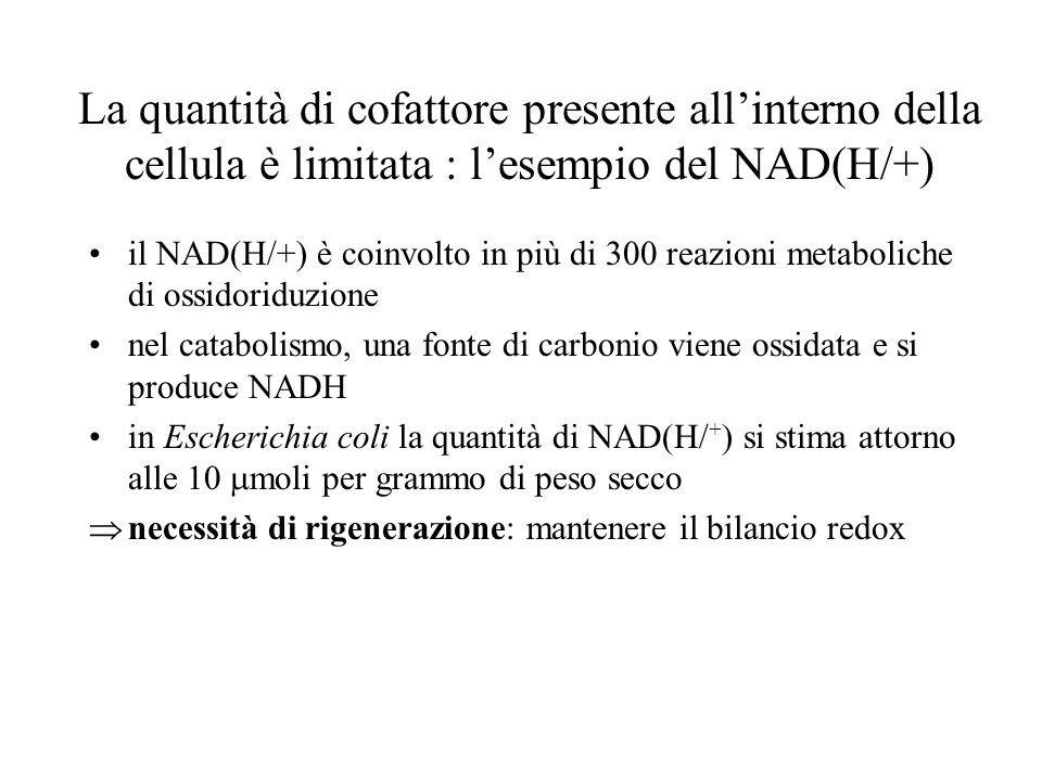 La quantità di cofattore presente allinterno della cellula è limitata : lesempio del NAD(H/+) il NAD(H/+) è coinvolto in più di 300 reazioni metaboliche di ossidoriduzione nel catabolismo, una fonte di carbonio viene ossidata e si produce NADH in Escherichia coli la quantità di NAD(H/ + ) si stima attorno alle 10 moli per grammo di peso secco necessità di rigenerazione: mantenere il bilancio redox