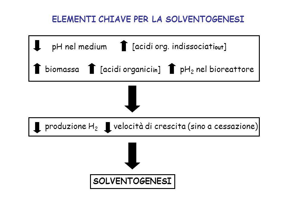 ELEMENTI CHIAVE PER LA SOLVENTOGENESI pH nel medium [acidi org. indissociati out ] biomassa [acidi organici in ]pH 2 nel bioreattore produzione H 2 ve