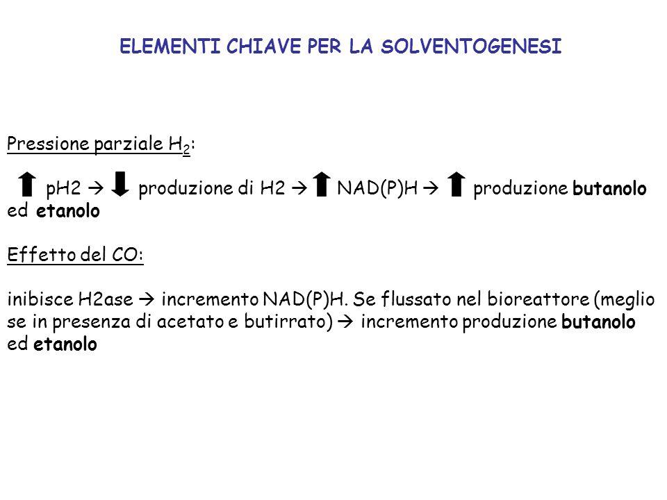 ELEMENTI CHIAVE PER LA SOLVENTOGENESI Pressione parziale H 2 : pH2 produzione di H2 NAD(P)H produzione butanolo ed etanolo Effetto del CO: inibisce H2