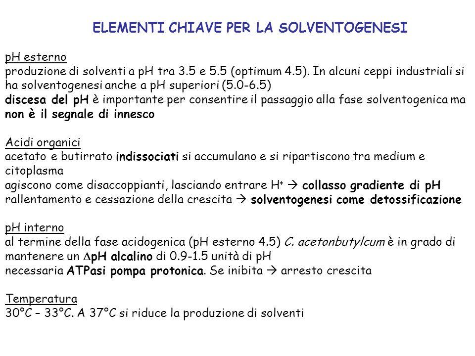 pH esterno produzione di solventi a pH tra 3.5 e 5.5 (optimum 4.5). In alcuni ceppi industriali si ha solventogenesi anche a pH superiori (5.0-6.5) di