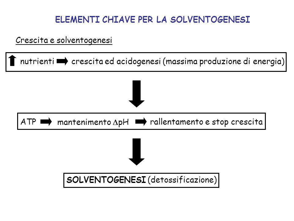 Crescita e solventogenesi nutrienticrescita ed acidogenesi (massima produzione di energia) ATP mantenimento pH rallentamento e stop crescita SOLVENTOG