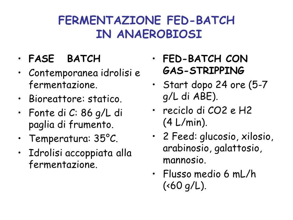 FERMENTAZIONE FED-BATCH IN ANAEROBIOSI FASE BATCH Contemporanea idrolisi e fermentazione. Bioreattore: statico. Fonte di C: 86 g/L di paglia di frumen