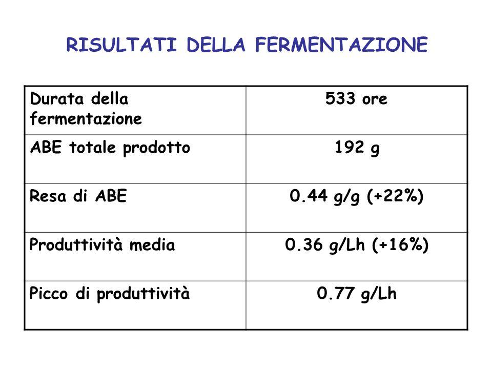 RISULTATI DELLA FERMENTAZIONE Durata della fermentazione 533 ore ABE totale prodotto192 g Resa di ABE0.44 g/g (+22%) Produttività media0.36 g/Lh (+16%