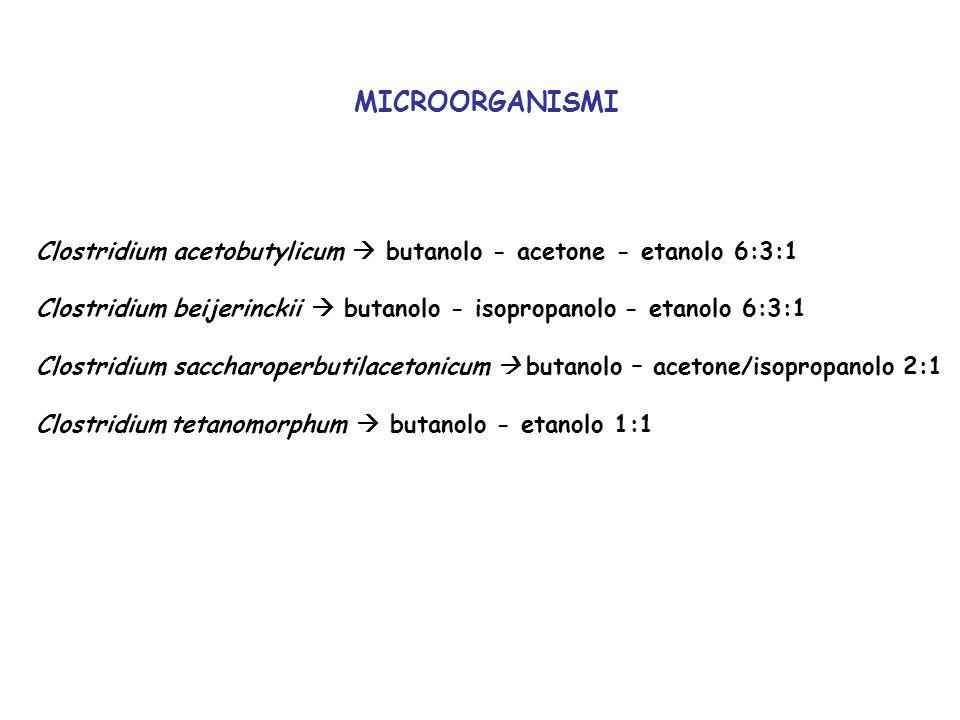 MICROORGANISMI Clostridium acetobutylicum butanolo - acetone - etanolo 6:3:1 Clostridium beijerinckii butanolo - isopropanolo - etanolo 6:3:1 Clostrid