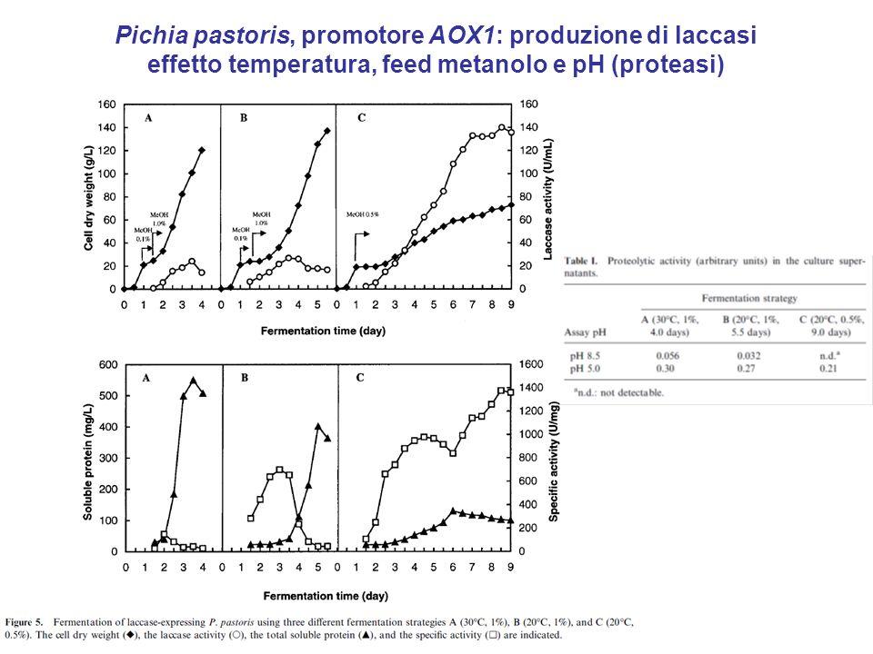 Pichia pastoris, promotore AOX1: produzione di laccasi effetto temperatura, feed metanolo e pH (proteasi)