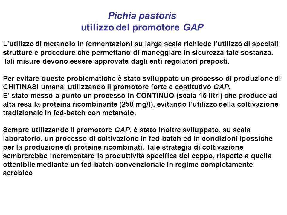 Pichia pastoris utilizzo del promotore GAP Lutilizzo di metanolo in fermentazioni su larga scala richiede lutilizzo di speciali strutture e procedure