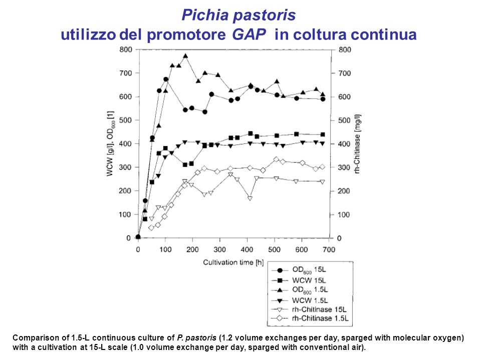 Pichia pastoris utilizzo del promotore GAP in coltura continua Comparison of 1.5-L continuous culture of P.