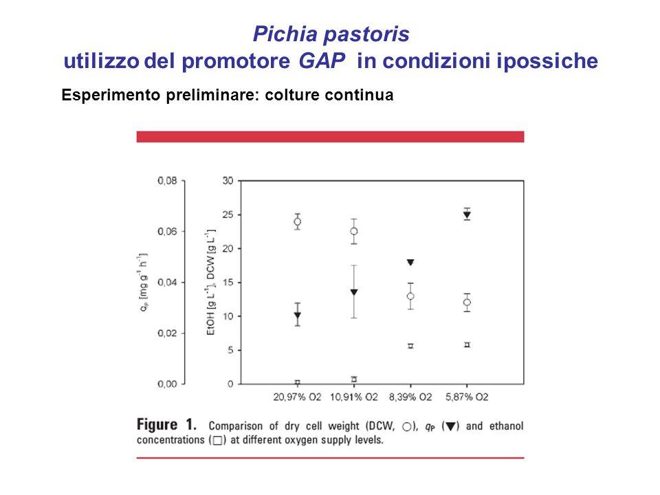 Pichia pastoris utilizzo del promotore GAP in condizioni ipossiche Esperimento preliminare: colture continua