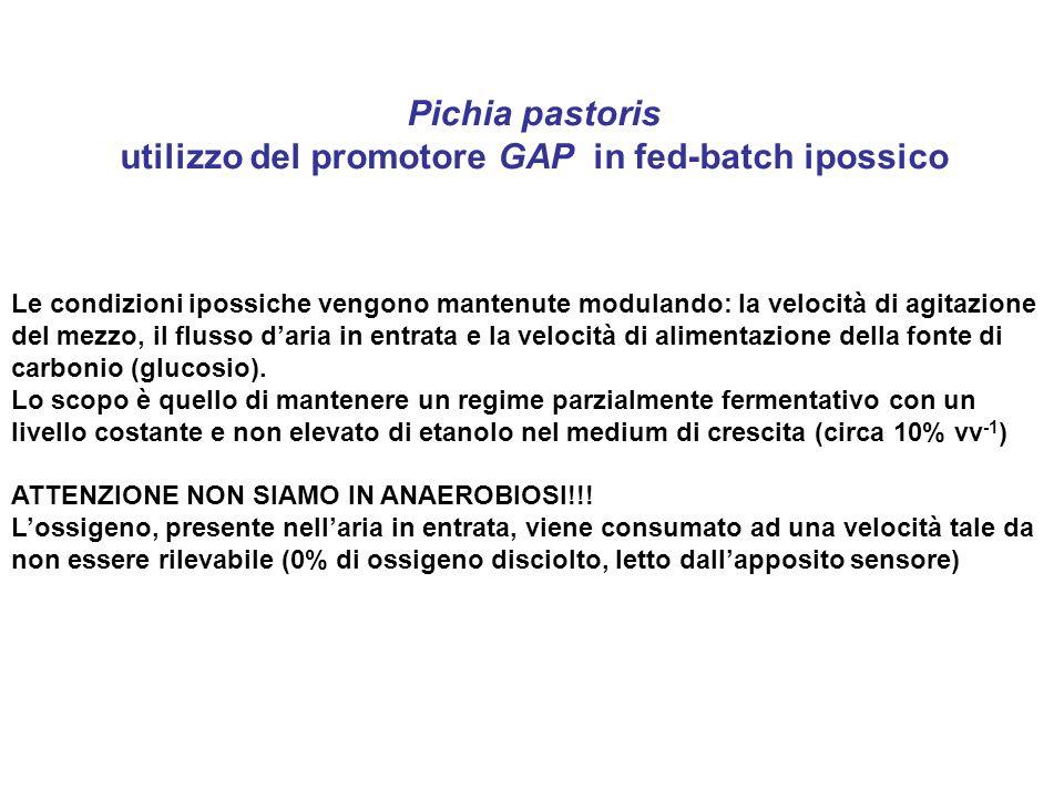 Pichia pastoris utilizzo del promotore GAP in fed-batch ipossico Le condizioni ipossiche vengono mantenute modulando: la velocità di agitazione del me