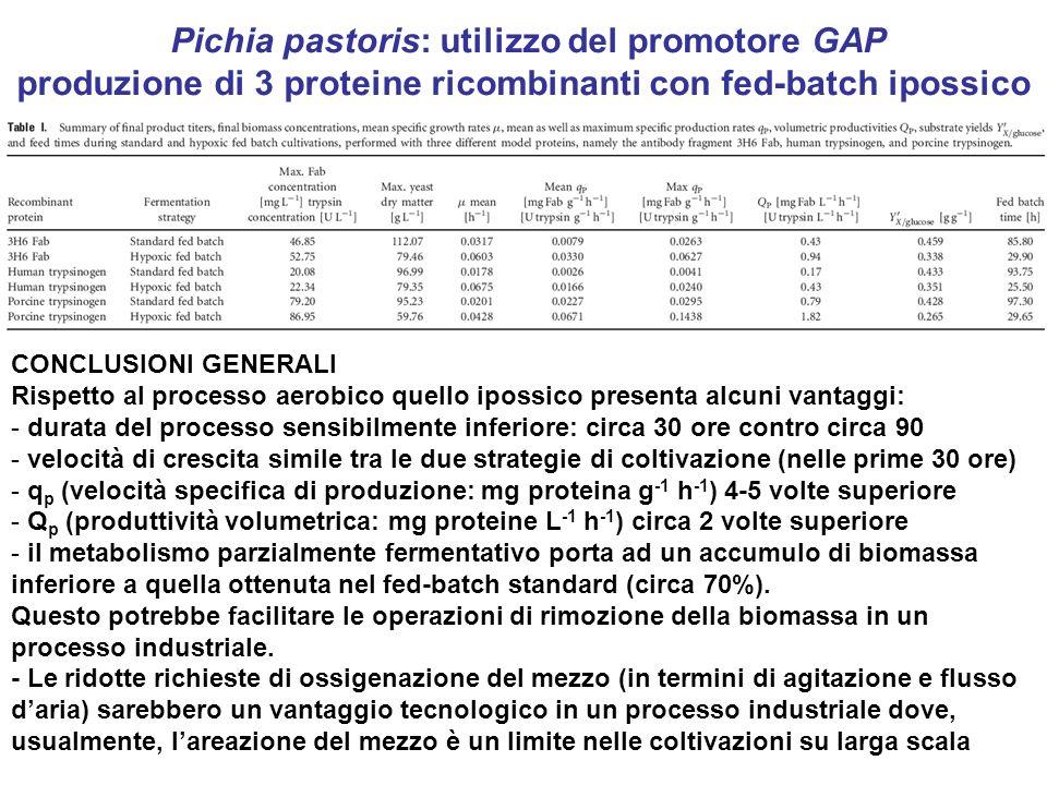 Pichia pastoris: utilizzo del promotore GAP produzione di 3 proteine ricombinanti con fed-batch ipossico CONCLUSIONI GENERALI Rispetto al processo aer