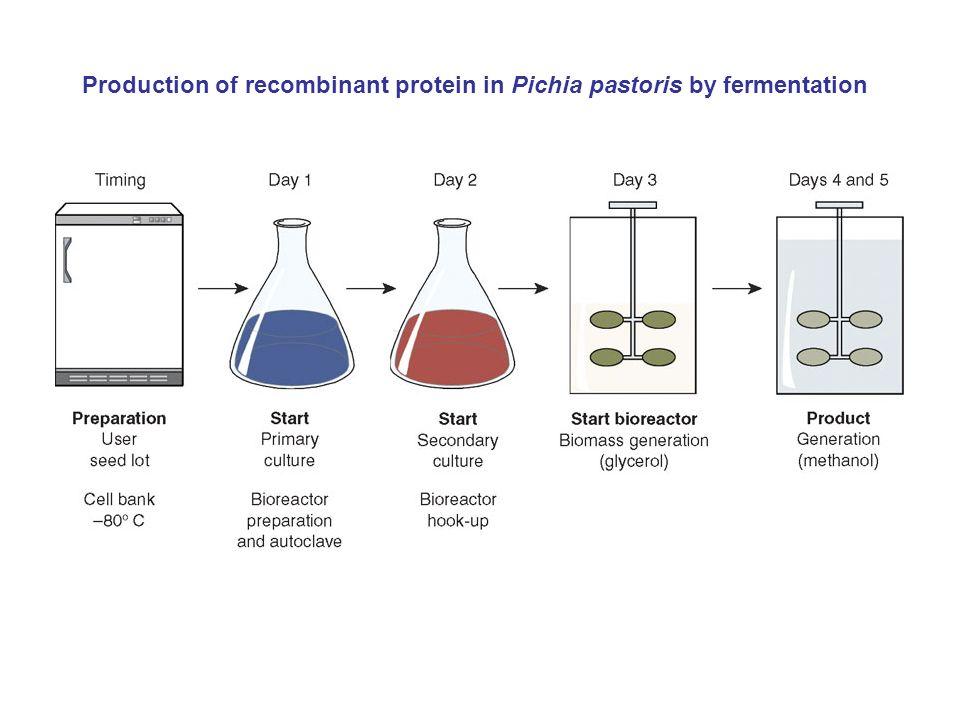 Chung et al.Microbial Cell Factories 2010, 9:50 Reconstruction of Pichia pastoris.