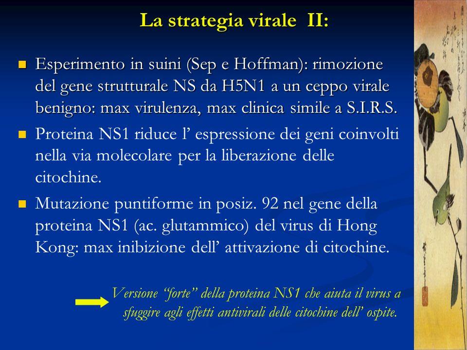 La strategia virale II: Esperimento in suini (Sep e Hoffman): rimozione del gene strutturale NS da H5N1 a un ceppo virale benigno: max virulenza, max