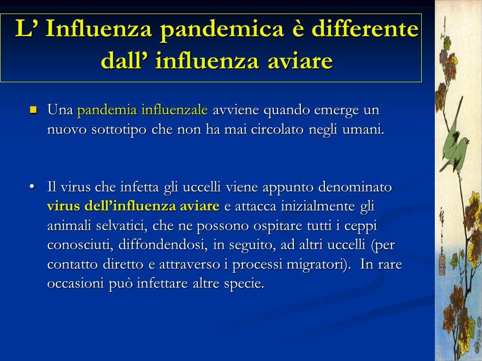 L Influenza pandemica è differente dall influenza aviare Una pandemia influenzale avviene quando emerge un nuovo sottotipo che non ha mai circolato ne