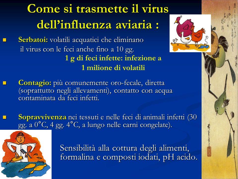 Come si trasmette il virus dellinfluenza aviaria : Serbatoi: volatili acquatici che eliminano Serbatoi: volatili acquatici che eliminano il virus con