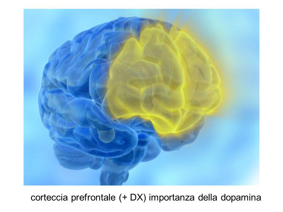 corteccia prefrontale (+ DX) importanza della dopamina