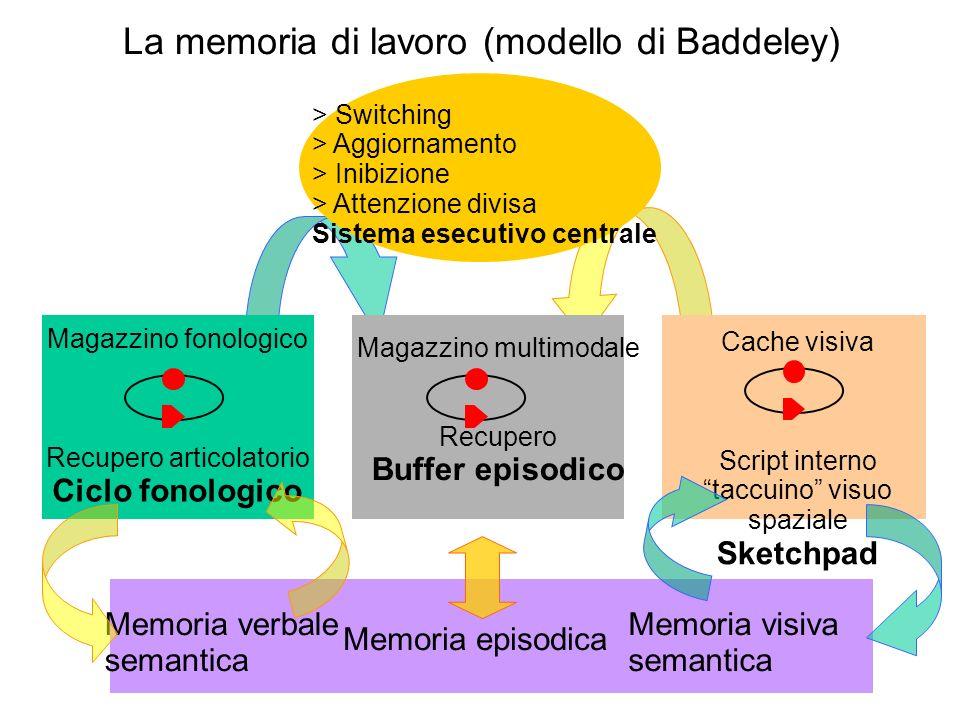 Magazzino fonologico Recupero articolatorio Ciclo fonologico La memoria di lavoro (modello di Baddeley) > Switching > Aggiornamento > Inibizione > Att
