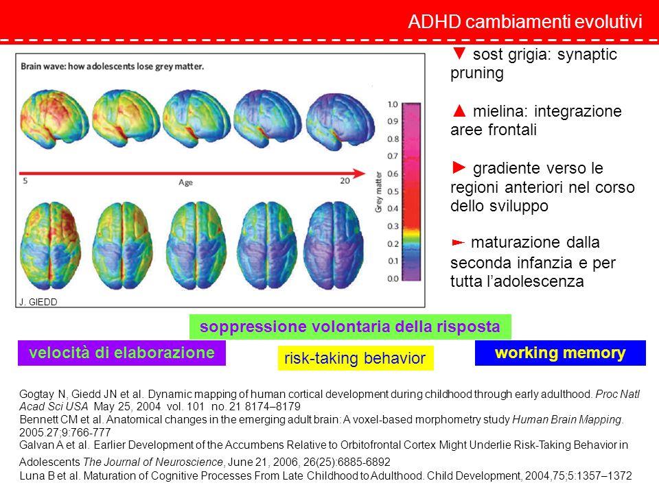 sost grigia: synaptic pruning mielina: integrazione aree frontali gradiente verso le regioni anteriori nel corso dello sviluppo maturazione dalla seco