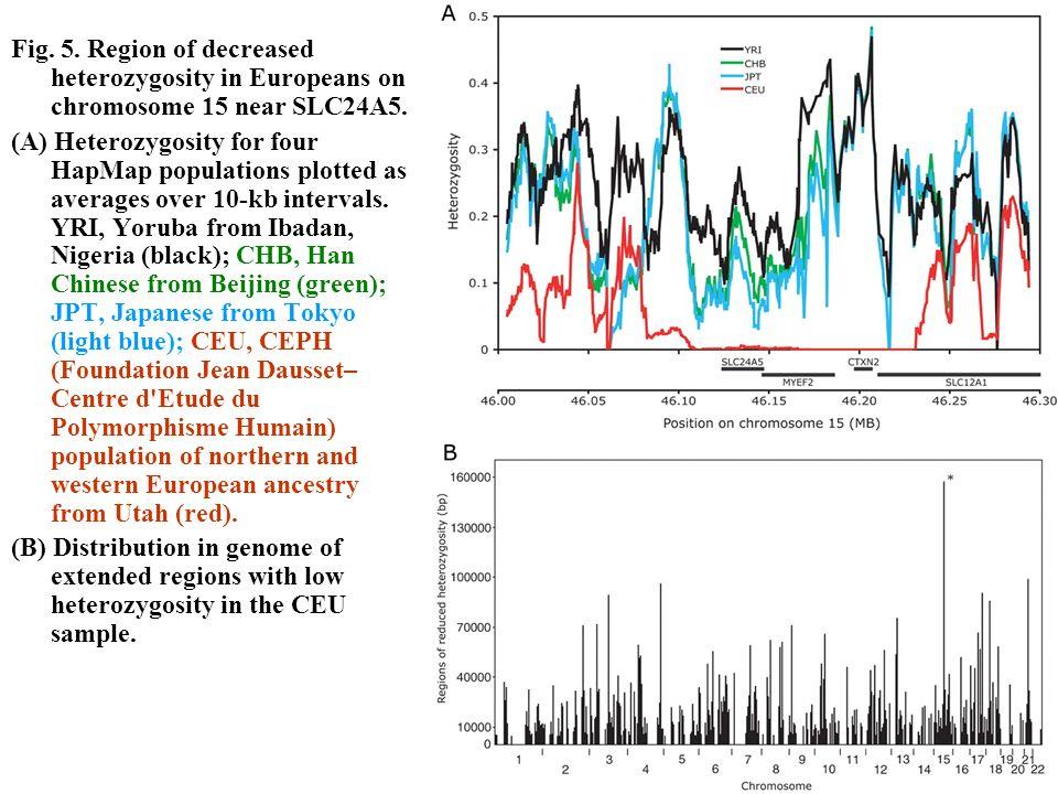 Fig. 5. Region of decreased heterozygosity in Europeans on chromosome 15 near SLC24A5. (A) Heterozygosity for four HapMap populations plotted as avera