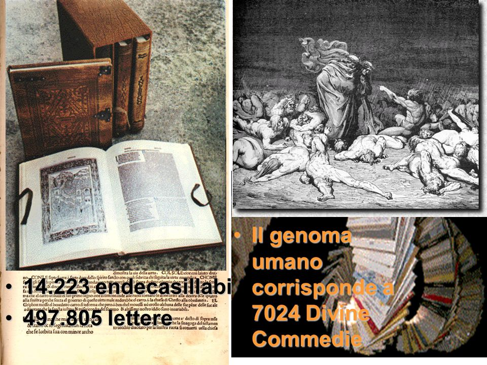 Genoma umano: 3.5 miliardi di basi Il genoma umano come una biblioteca una base come una lettera dellalfabeto 14.223 endecasillabi14.223 endecasillabi 497.805 lettere497.805 lettere Il genoma umano corrisponde a 7024 Divine CommedieIl genoma umano corrisponde a 7024 Divine Commedie
