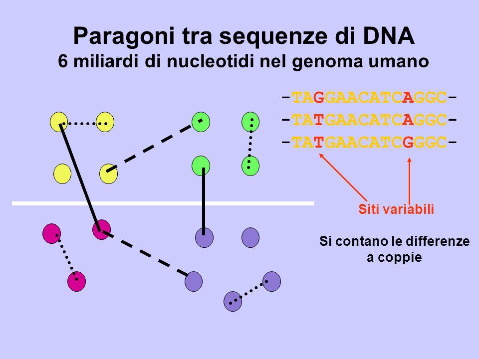 Paragoni tra sequenze di DNA 6 miliardi di nucleotidi nel genoma umano -TAGGAACATCAGGC- -TATGAACATCAGGC- -TATGAACATCGGGC- Siti variabili Si contano le differenze a coppie