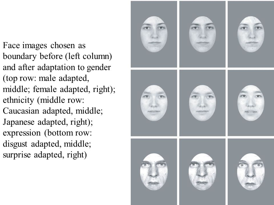 Face images chosen as boundary before (left column) and after adaptation to gender (top row: male adapted, middle; female adapted, right); ethnicity (middle row: Caucasian adapted, middle; Japanese adapted, right); expression (bottom row: disgust adapted, middle; surprise adapted, right)