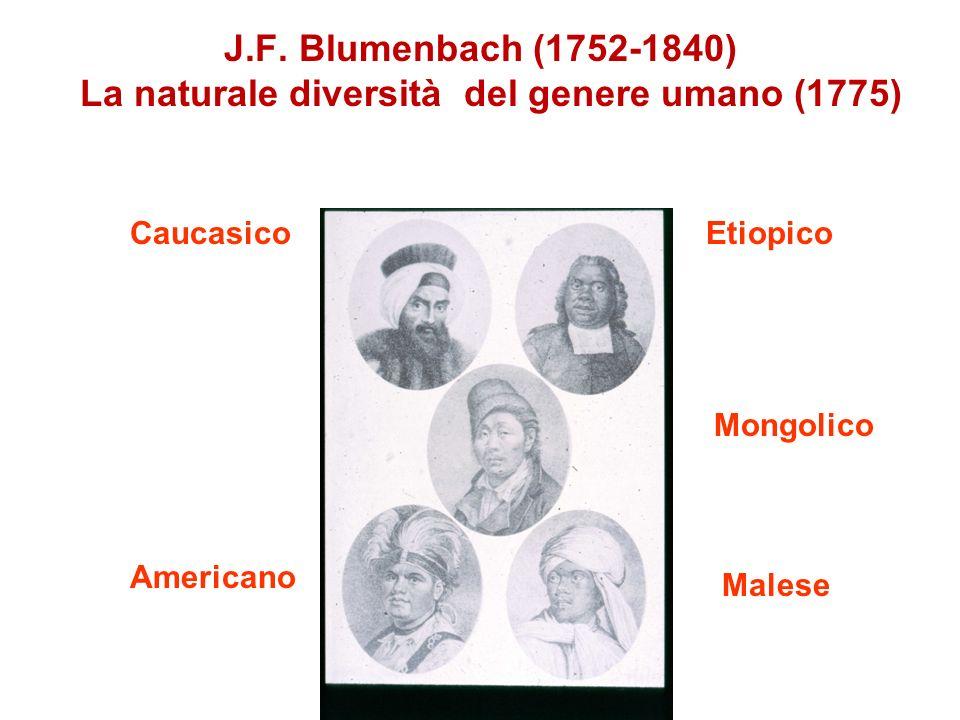 J.F. Blumenbach (1752-1840) La naturale diversità del genere umano (1775) CaucasicoEtiopico Mongolico Americano Malese