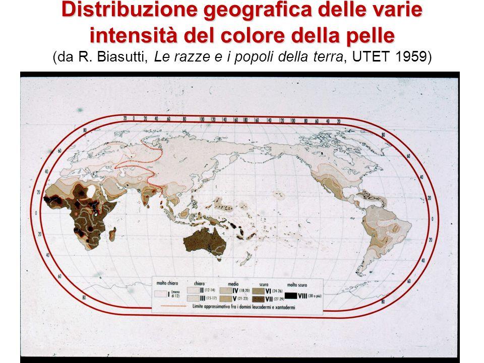 Distribuzione geografica delle varie intensità del colore della pelle Distribuzione geografica delle varie intensità del colore della pelle (da R. Bia