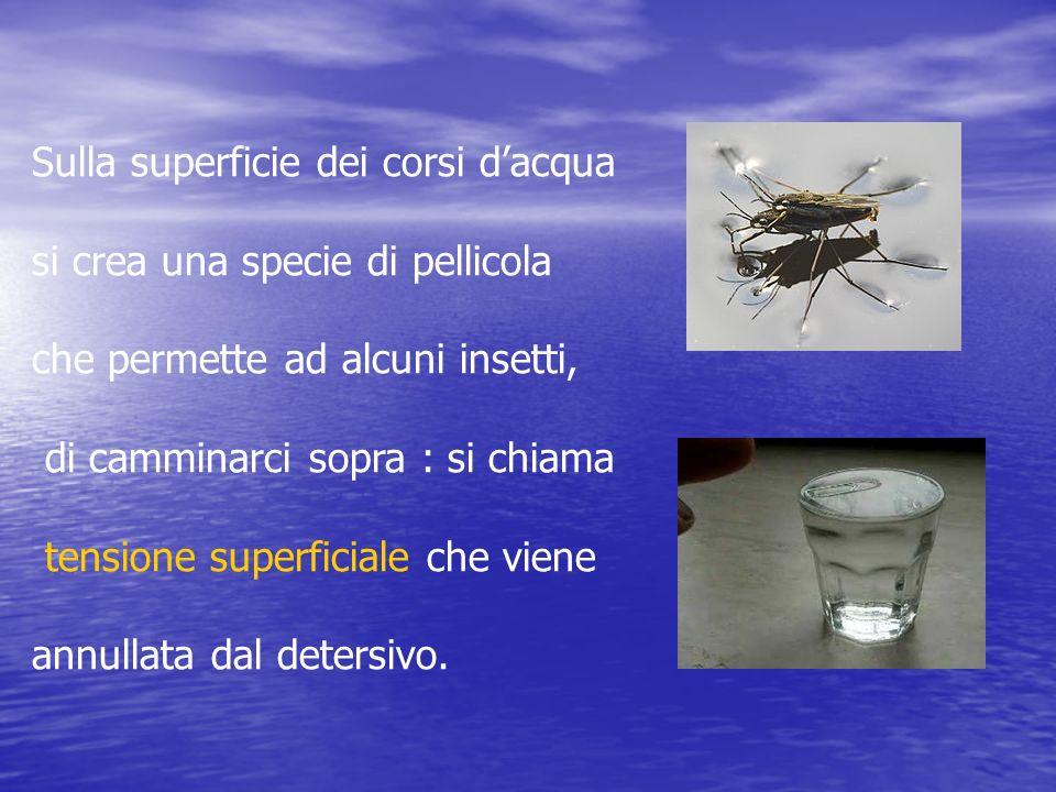 Sulla superficie dei corsi dacqua si crea una specie di pellicola che permette ad alcuni insetti, di camminarci sopra : si chiama tensione superficial