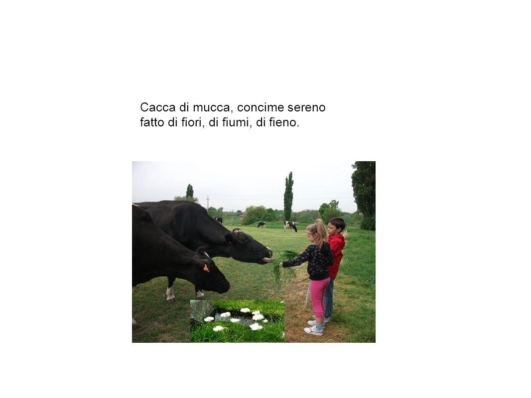 Cacca di mucca, concime sereno fatto di fiori, di fiumi, di fieno.