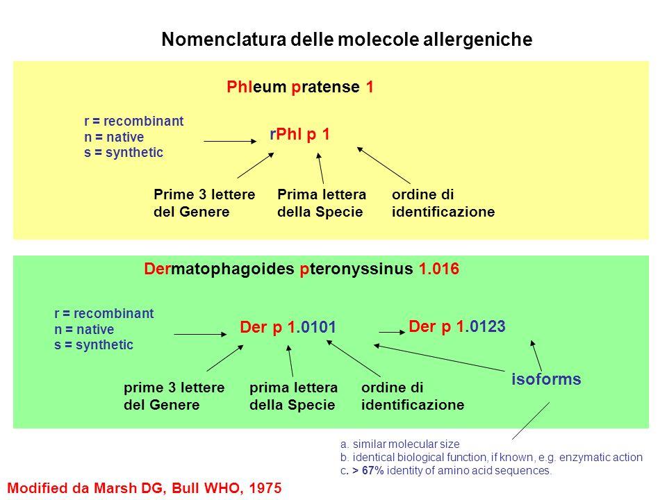 Phleum pratense 1 rPhl p 1 Prime 3 lettere del Genere Prima lettera della Specie ordine di identificazione r = recombinant n = native s = synthetic De