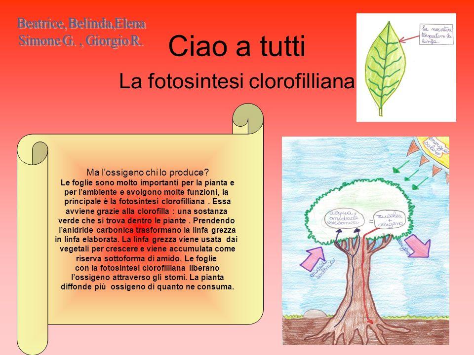 Ciao a tutti La fotosintesi clorofilliana Ma lossigeno chi lo produce? Le foglie sono molto importanti per la pianta e per lambiente e svolgono molte