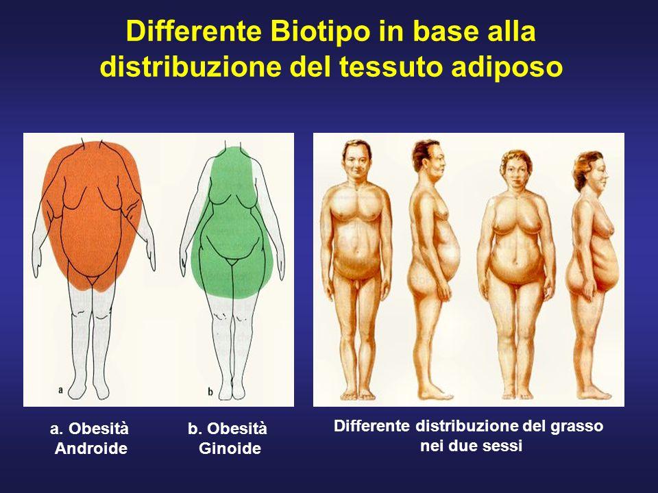 Differente Biotipo in base alla distribuzione del tessuto adiposo a. Obesità Androide b. Obesità Ginoide Differente distribuzione del grasso nei due s