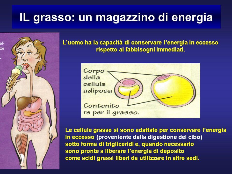 IL grasso: un magazzino di energia Luomo ha la capacità di conservare lenergia in eccesso rispetto ai fabbisogni immediati.