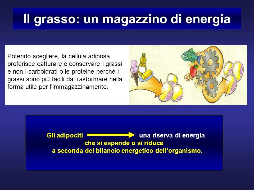 Il grasso: un magazzino di energia Potendo scegliere, la cellula adiposa preferisce catturare e conservare i grassi e non i carboidrati o le proteine